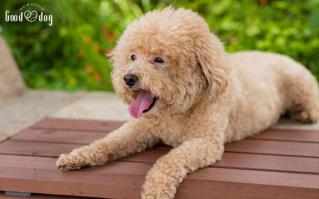como cuidar a tu perro del calor